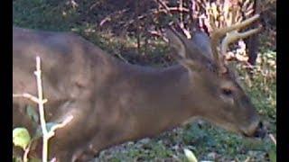 October 2018 Deer Cam