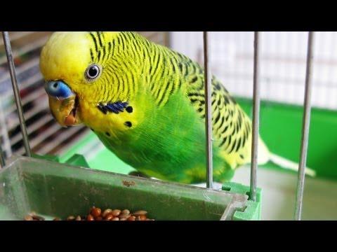 How to Quiet a Bird | Pet Bird