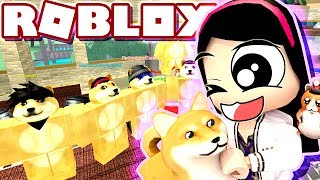 Roblox Doge Tycoon Lucas The Spider Gary The Snail And A Lobster Roblox Pet Escape With Gamer Chad Microguardian