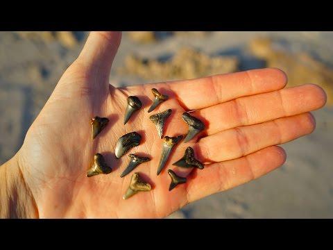 Searching For Prehistoric Shark Teeth!! | Beach Treasure Hunting