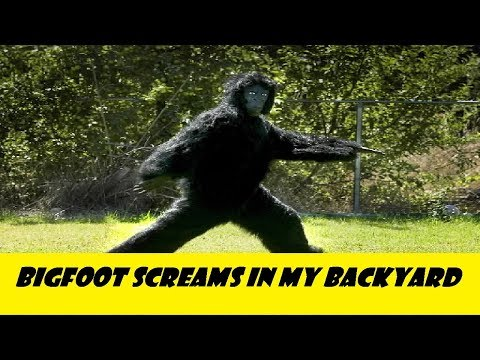 Bigfoot in Southern Indiana.  Screams in the woods behind my house.