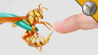 Download STUNG by an EXECUTIONER WASP! Video