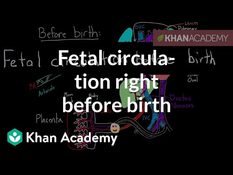 Fetal circulation right before birth | Circulatory system physiology | NCLEX-RN | Khan Academy