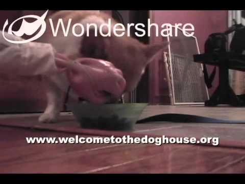 Extreme Dog Food Aggression Behavior Modification