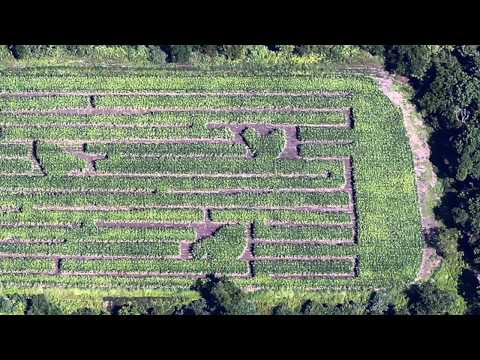 Behind the scenes look: Creating Howell Living Farm's corn maze
