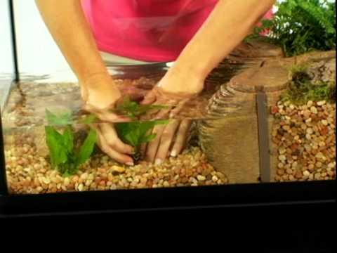 TetraCare for Semi-Aquatic Turtle Environments