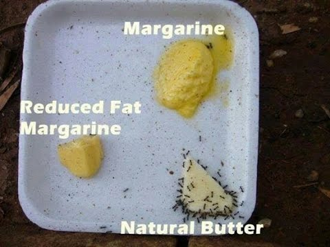 DO ANTS PREFER BUTTER OVER MARGARINE?
