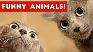 Funniest Pet Fails & Bloopers Compilation November 2016   Funny Pet Videos