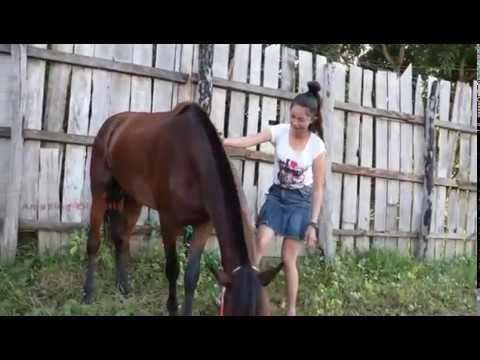 Xxx Mp4 Amazing Girl Pacaran Sama Kuda 3gp Sex