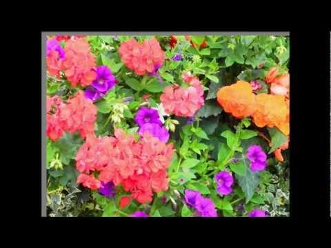 PhotoshopElements 9: Flower Editing Fun