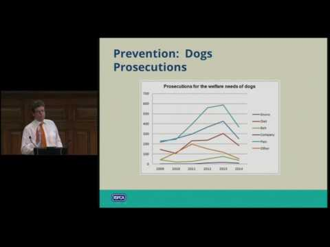 Is the Animal Welfare Act working from the companion animal and equine perspective?