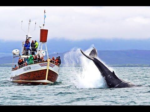 Whale Watching Húsavík Iceland – Walbeobachtung Island