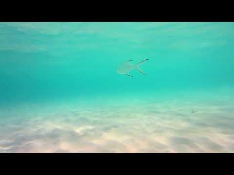 Calming Music〜Stress Relief〜Sleep Music〜Study Music〜癒しの動画 ,癒しの音楽
