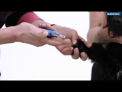 How to Cut Your Dog's Claws with a Nail Clipper