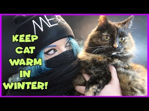 How To Keep Your Cat Warm in Winter! Tips For Warming Your Cat and Keeping Them Happy in Winter!
