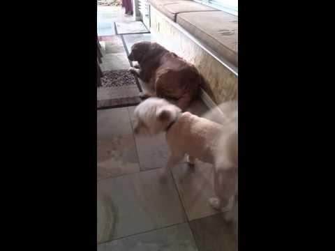 Dog Night Terror -  November 4, 2015