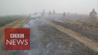 Why are peatlands burning in Indonesia? BBC News