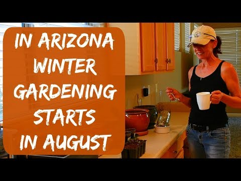 Starting Seeds For My Winter Gardening Season In Arizona - Bell Peppers, Tomatoes, Cucumbers
