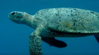 Feeding the Ocean | Turtle
