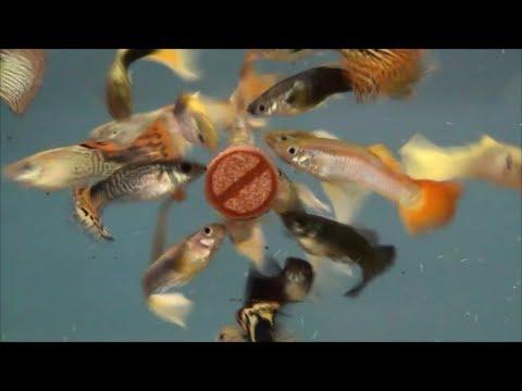FISH SCIENCE AQUARIUM FISH FOOD
