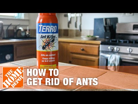 How To Get Rid of Ants - The Home Depot
