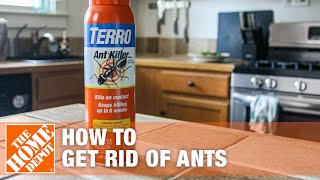 How To Get Rid Of Ants The Home Depot