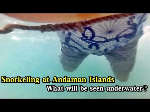 Snorkeling in Andaman | My First Time Snorkeling Video in Andaman Islands