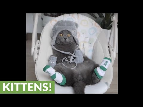 Lazy kitty lounges on baby rocker