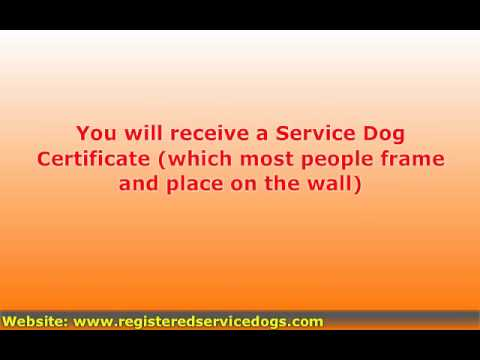 Registering a Service Dog or a Therapy Dog