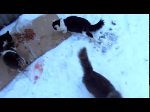 cats are going to eat together Cat food, Cold winter day 1