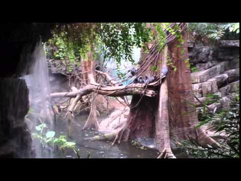 How to Go New York Bronx Zoo