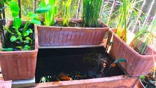 como hacer un estanque en una maceta