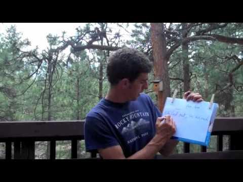 Discovering Bird Language