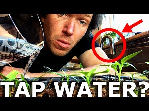 Is Tap Water Safe For Hydroponics???