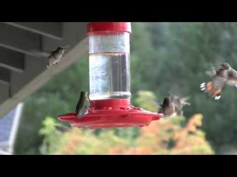 Kathy's Hummingbird Feeder