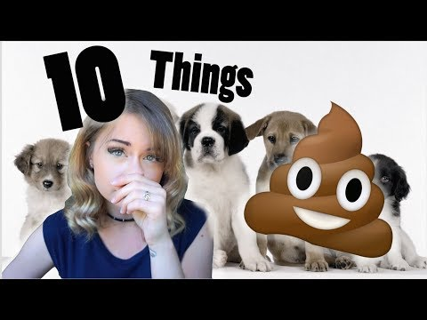 🐶 10 THINGS YOU NEED TO KNOW BEFORE GETTING A PUPPY / DOG 🐶
