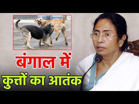 देखिए कैसे इन खूंखार कुत्तों ने बढ़ाई Mamata Banerjee की मुश्किलें