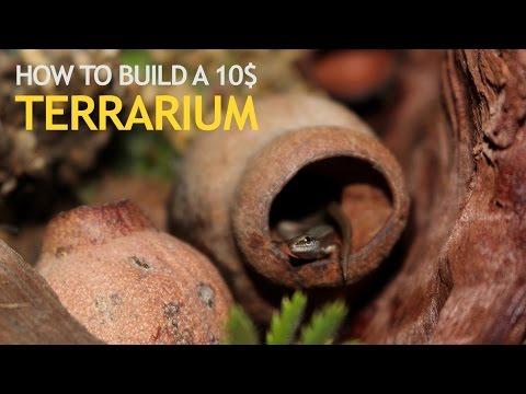HOW TO BUILD A 10$ TERRARIUM