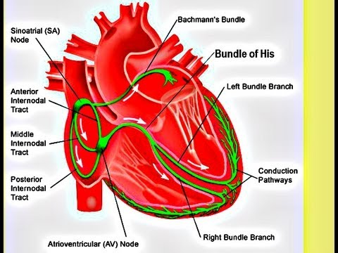 Atrial Fibrillation - Clinical Perspective