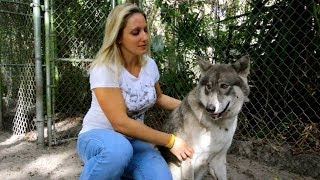 Playing With Wolves
