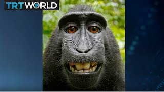 Monkey Selfie Lawsuit: PETA Director Elisa Allen discusses the settled lawsuit