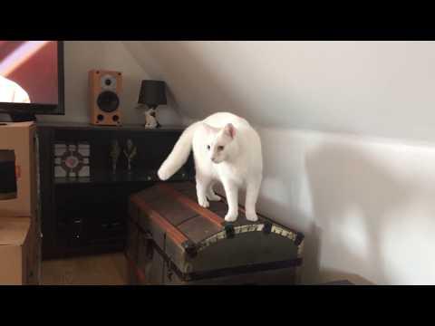 Cat zoomies ruins puzzle