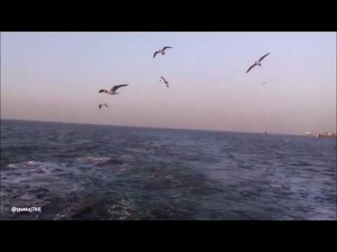 Glimpse of Arabian Sea || Mumbai Darshan || Elephanta Caves