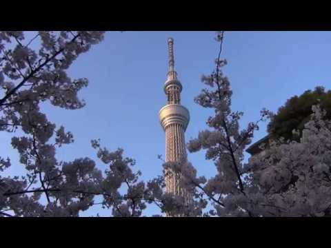 Tokyo Skytree and Cherry Blossoms along Sumida River in Japan
