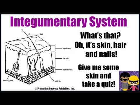 Integumentary System Function Human Body Skin Hair Nails Anatomy Science Video for Middle School