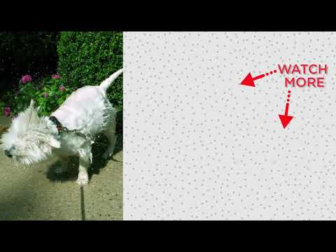Xxx Mp4 Golden Retriever Dog Always Interrupts Mom 39 S Workouts The Dodo 3gp Sex