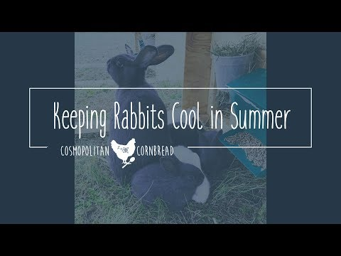 How to Keep Rabbits Cool in the Summer HEAT | CosmoCornbread