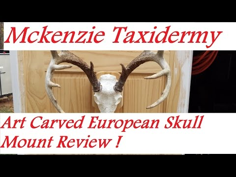 Art Carved Two-Piece Skull Review (Mckenzie Taxidermy)