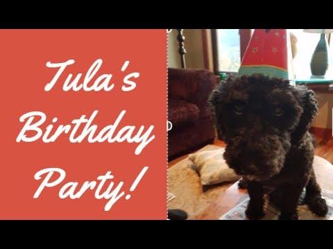 Dog Birthday Parties?  Happy Birthday Tula!