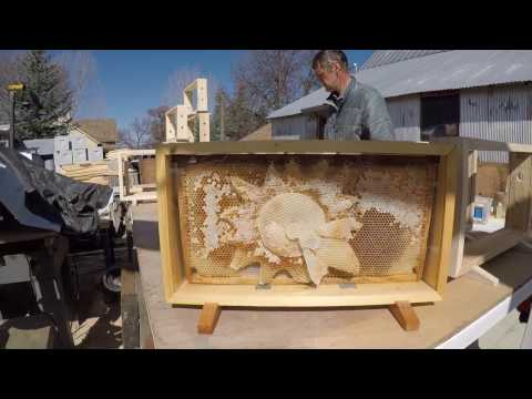 Display Case Observation Hive
